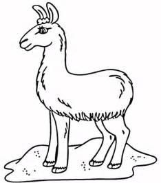 llama coloring pages llama printable coloring pages