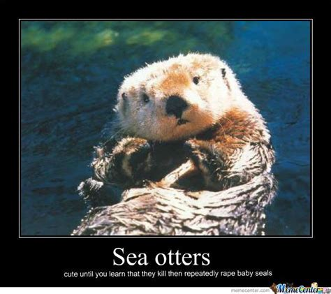 Sea Otter Meme - 42 best images about otter spirit animal on pinterest