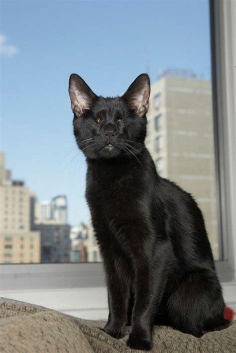 Homer Blind Cat farewell to homer the blind cat catster