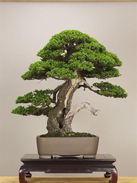 66 best images about bonsai drawing on bonsai trees tree drawings and dibujo best 25 bonsai art ideas on bonsai bonsai making and bonsai trees