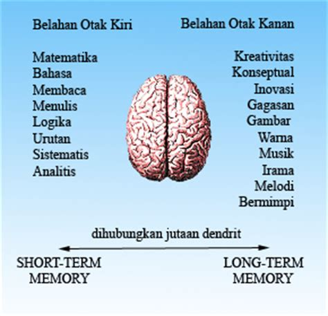 hemisfer bahasa indonesia ensiklopedia bebas