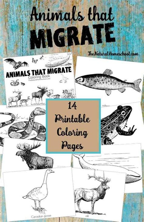 coloring pages of animals that migrate animals that migrate in winter printable coloring book