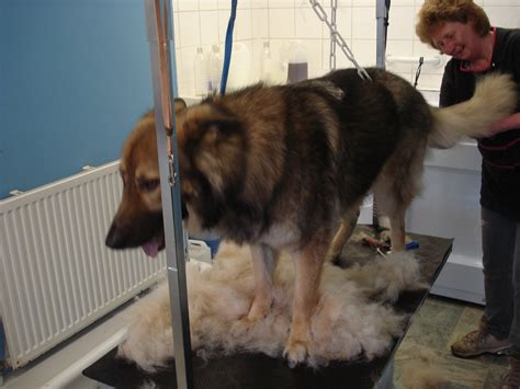 at what age can you bathe a puppy grooming a heavy coated german shepherd 4 paws and cat grooming aldershot
