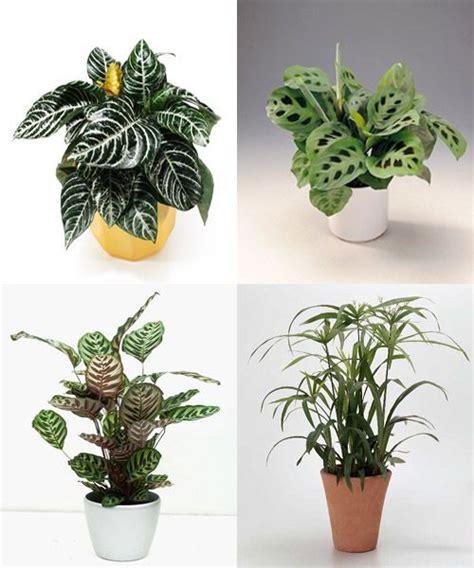 plantas de interior poca luz plantas de interior con poca luz decoracion de interiores