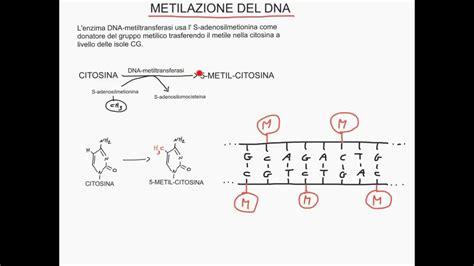 epigenetica e alimentazione corso di genetica e alimentazione lezione 8 di 40