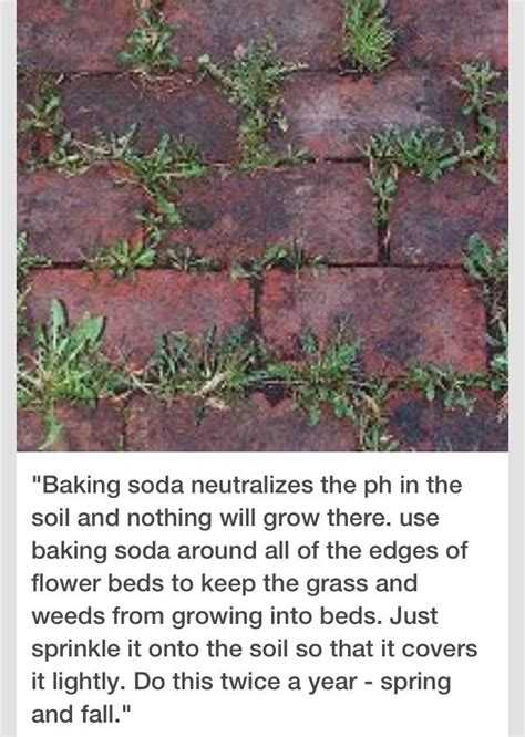 how to kill grass in flower beds 25 best ideas about grass weeds on pinterest homemade