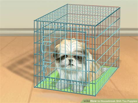 best way to potty a shih tzu 3 ways to housebreak shih tzu puppies wikihow