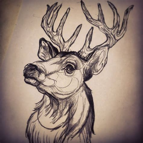 deer head by dicknosetengu deviantart com on deviantart