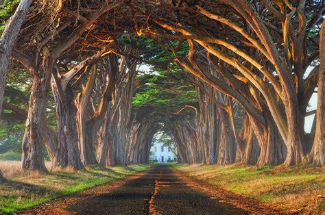 Trees From Around The World by Tree Tunnel Mist Sie
