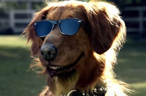 go commercial puppy bush s grillin beans commercial talking