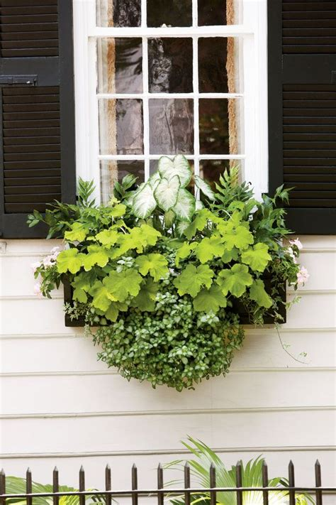 north window plants 197 best images about container garden on pinterest