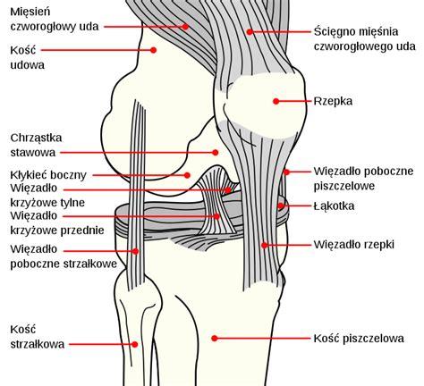 knee diagrams file knee diagram pl svg wikimedia commons