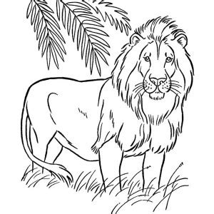 african lion coloring pages 25 african lion coloring page african lion coloring page