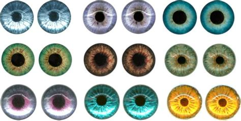 printable iris eyes pinterest the world s catalog of ideas