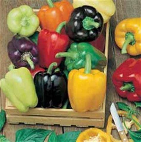 Isi 7 Biji Benih Biji Paprika Mix 1 benih paprika colour spectrum 5 biji non retail