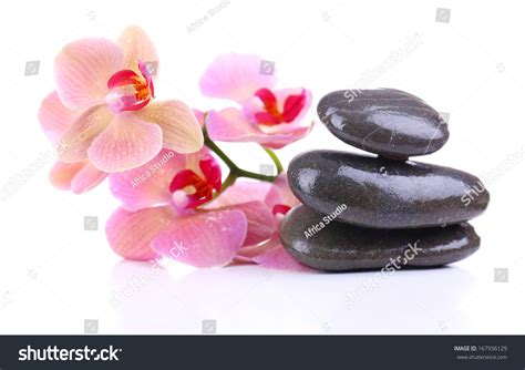 composition with beautiful blooming orchid with water composition beautiful blooming orchid water drops stock