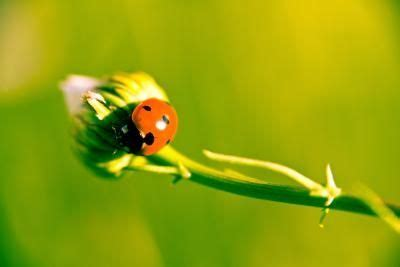 how to get rid of ladybugs inside house pinterest the world s catalog of ideas