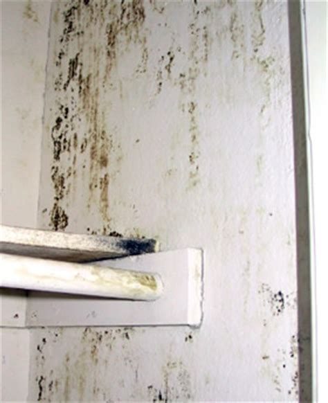house mold house mold