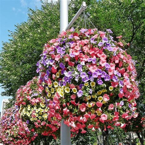 hanging baskets wave petunias flowers and more pinterest