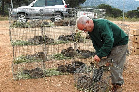 jaulas conejeras industriales construye tu propio criadero de conejos