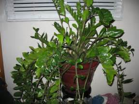 foliage house plant identification pics for gt indoor tropical plants identification