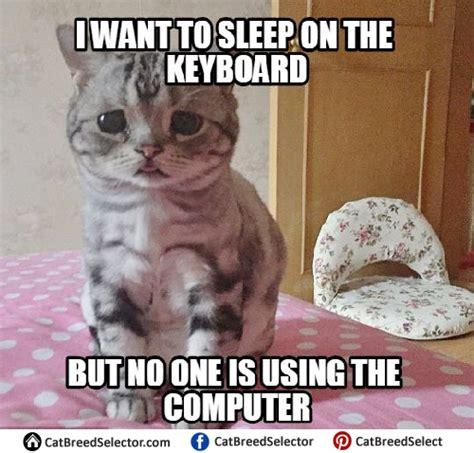 sad cat memes cat breed selector