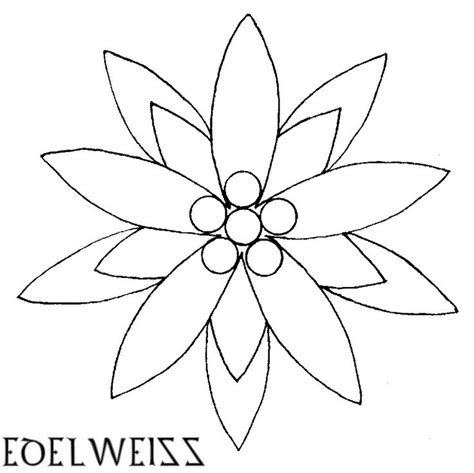 edelweiss flower coloring page best 25 edelweiss tattoo ideas on pinterest bloom