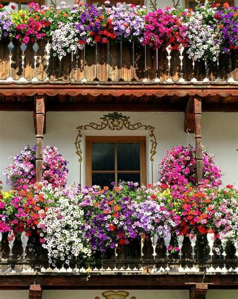 balcony flowers 55 balcony greenery ideas choose flowers for balcony and