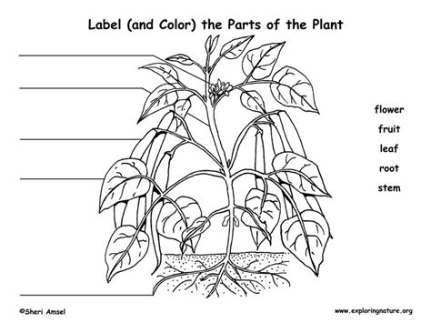 Label Parts Of The Worksheet by Label The Parts Of The Plant