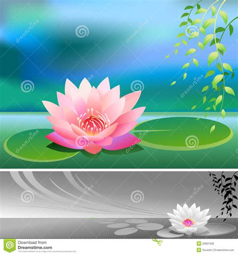 fiore di loto magic abstract lotus flower vector background royalty