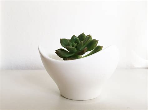white succulent planter white ceramic pot succulent plant succulent planter mini