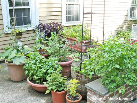Vegetable Gardening In Containers And Small Spaces Potted Vegetable Garden