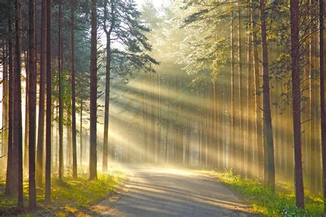 Nature In Lights by Wallpaper Rays Of Light Nature Roads Forests Trees 2628x1752