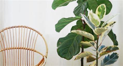piante verdi da interno piante verdi da appartamento piante da interno