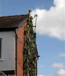 richard hope gardener grows britain s tallest sunflower