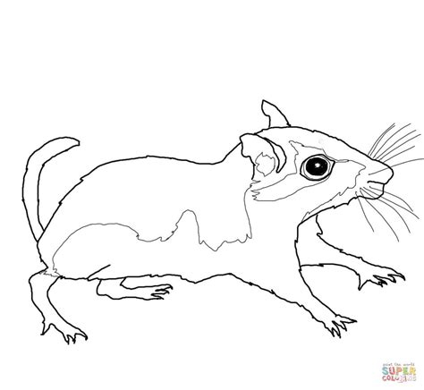gerbil coloring page free printable coloring pages