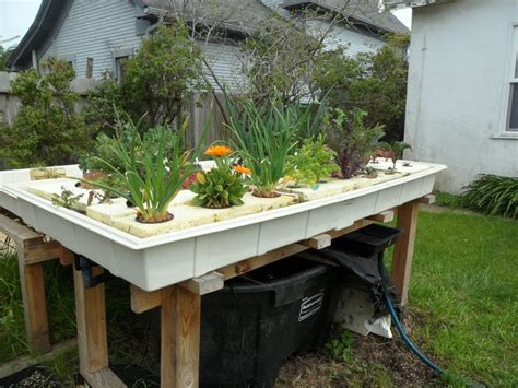9 must haves earlier than embarking on backyard aquaponics