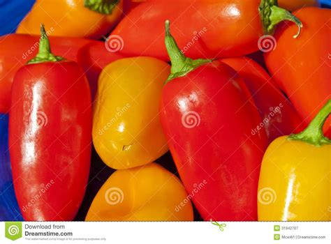 colored peppers multi colored peppers royalty free stock photography