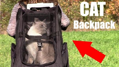 cat backpack oxgord pet backpack carrier review