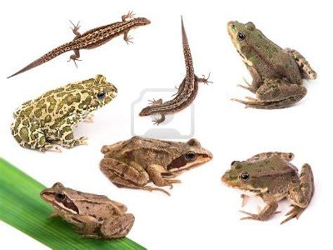 imagenes de animales vertebrados reptiles caracter 237 sticas de los animales descubriendo la ciencia