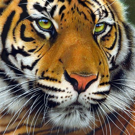 Painting Tiger 17 best images about tiger on tigers and a tiger