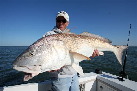 Florida Records Image Gallery Big Fish