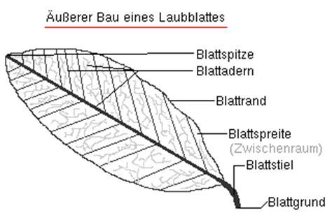 Beschriftung Querschnitt Laubblatt by Bibliothek Biologie Klasse 9