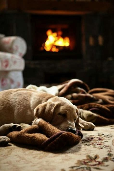 Fireplace Dogs by 535 Best Warm And Cozy By The Images On