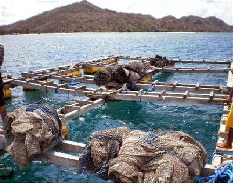 Mutiara Kerang Air Laut budidaya tiram mutiara informasi dunia air