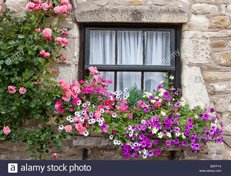 cottage window boxes cottage window with flower boxes holy island
