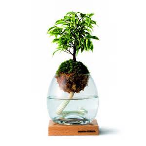 Simple answers about it also airplanter on wall herb garden design