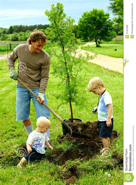tree and toddler and his children planting tree stock photo image