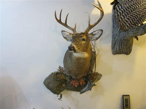 Deer Pedestal Big Game Mounts Amp Memories Taxidermy