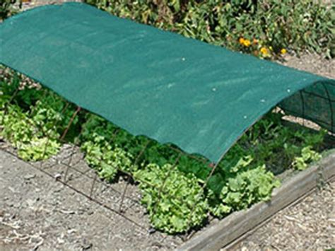 Eat Live Grow Paleo The Perfect First Vegetable Garden Shade Cloth Vegetable Garden